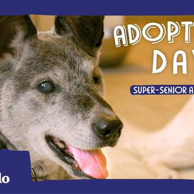 19-Year-Old Shelter Dog Finally Gets Adopted   The Dodo Adoption Day