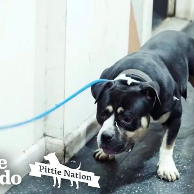 Aggressive Pit Bull Found In Basement Becomes A Giant Mush | The Dodo Pittie Nation