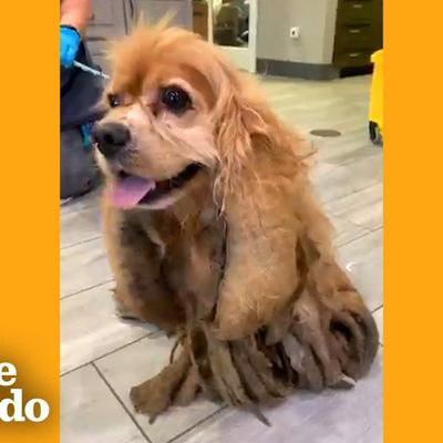 Dog Who Lost 5 Pounds Of Matted Fur Can't Stop Smiling | The Dodo