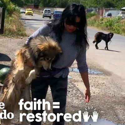 Woman In Romania Spends Days Trying To Catch Terrified Street Dogs   The Dodo Faith = Restored