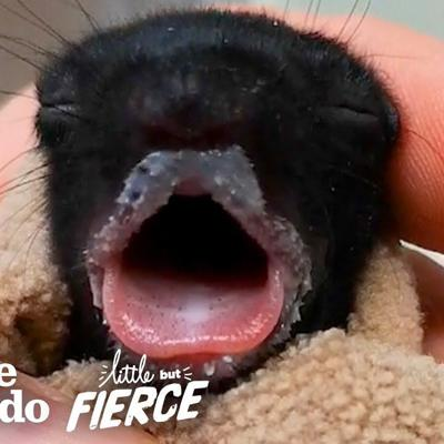 Furless Baby Squirrel Grows Up to be Cute... | The Dodo Little But Fierce