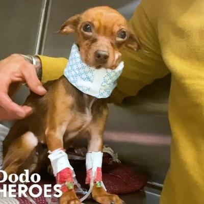 The Moment This Guy Realizes This Little Dog Is Going To Be Just Fine | The Dodo Heroes