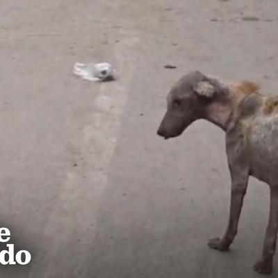 This Dog Found Walking In The Middle Of The Road Makes An Amazing Transformation | The Dodo