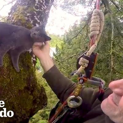 Thousands of Cats are Rescued from Trees by Climbers | The Dodo