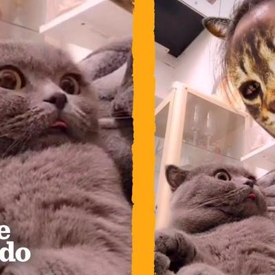 These Cats Don't Know How to React to This Cat Face Filter | The Dodo | The Dodo