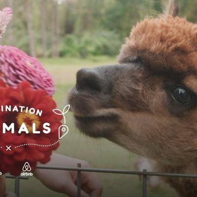 Surround Yourself With Fuzzy Alpacas   The Dodo Airbnb Experiences
