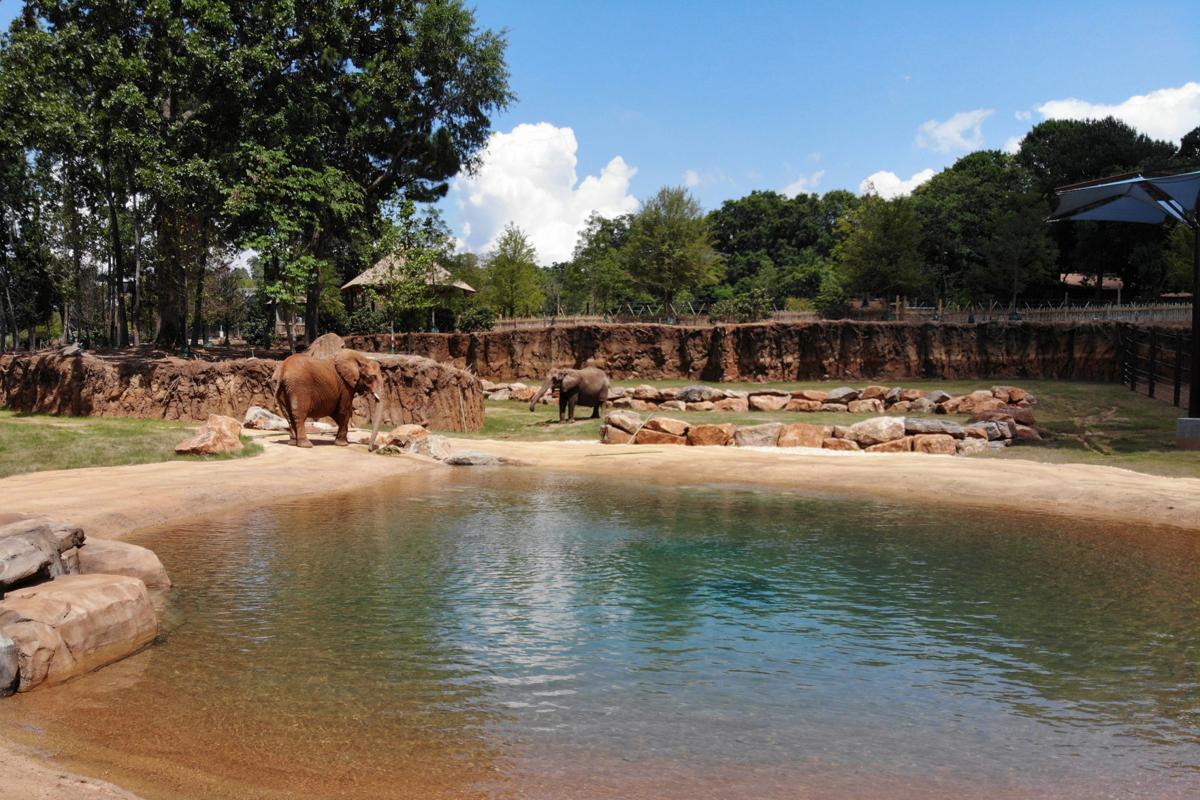 elephant_ZA_0844.jpg