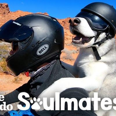 Guy And His Dog Are Visiting All 50 States On A Motorcycle | The Dodo | The Dodo Soulmates