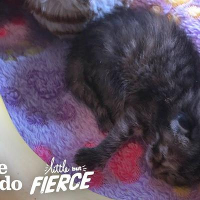 Watch A 3-Day-Old Kitten Grow Up So Big And CUTE | The Dodo Little But Fierce
