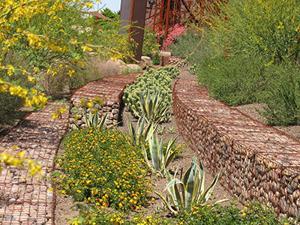 Scottsdale Xeriscape Garden