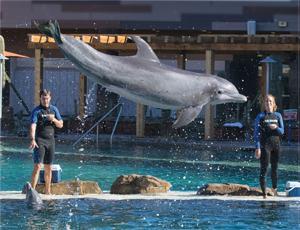 OdySea dolphin