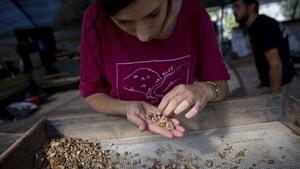 Rare Jewish coins found in Temple Mount excavation