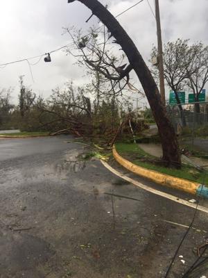 Hurricane Trees