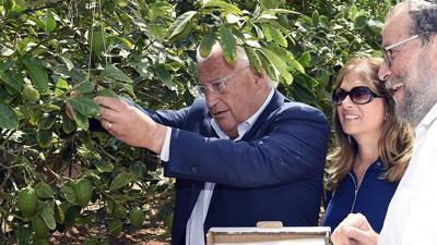 <p>U.S. Ambassador to Israel David Friedman picking an etrog with his wife, Tammy Deborah Sand, in the etrog orchard at Kfar Chabad.</p>