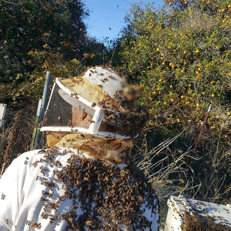 RH Bees