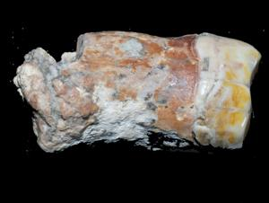 Neanderthal remains discovered in Israel may rewrite history