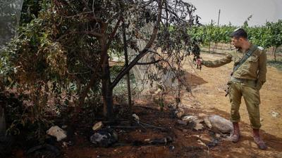 Orchard destruction