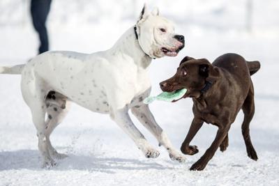 Dog park closure