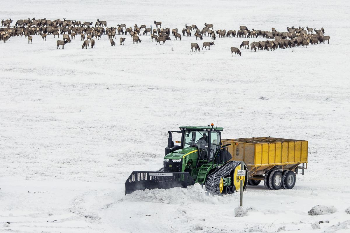 National Elk Refuge feeding