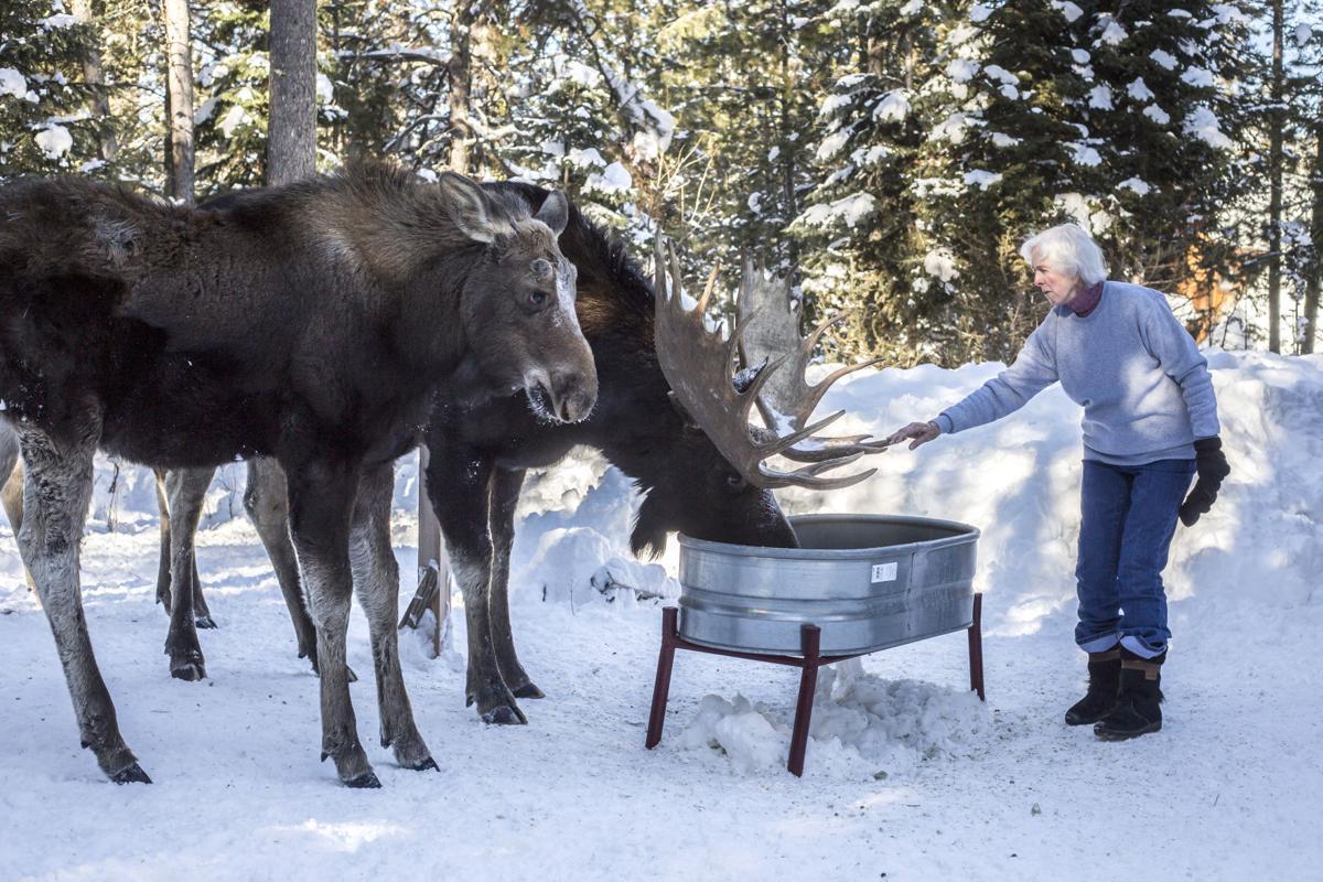 bans don u0027t halt wildlife feeding environmental jhnewsandguide com
