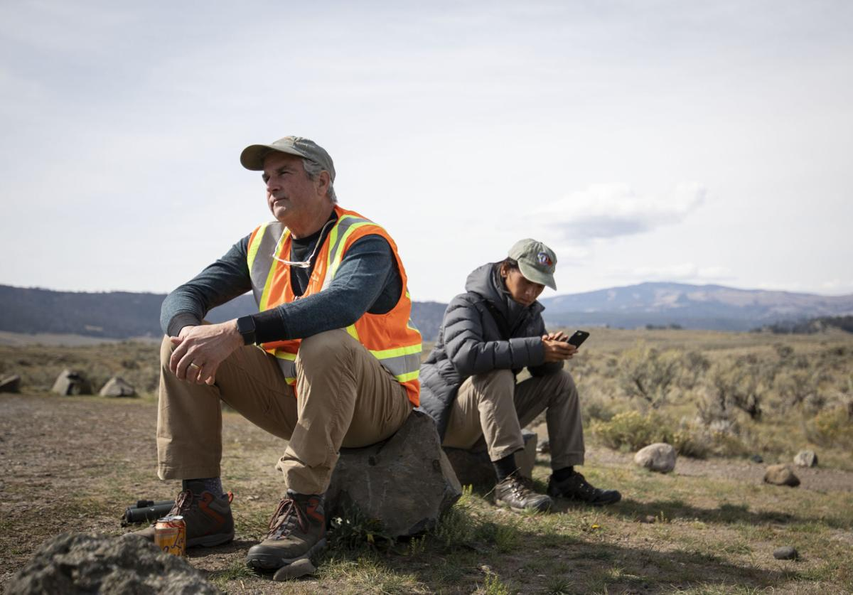 Raven research in Yellowstone