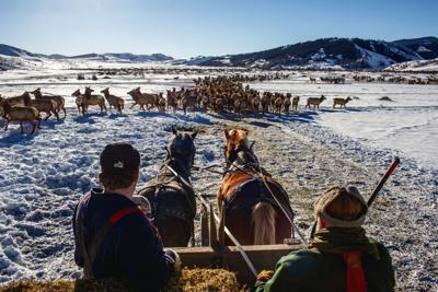 Patrol Cabin Elk Feedground