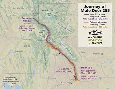Deer Migration Map