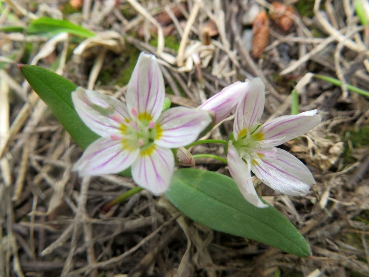 Wildflower of the Week