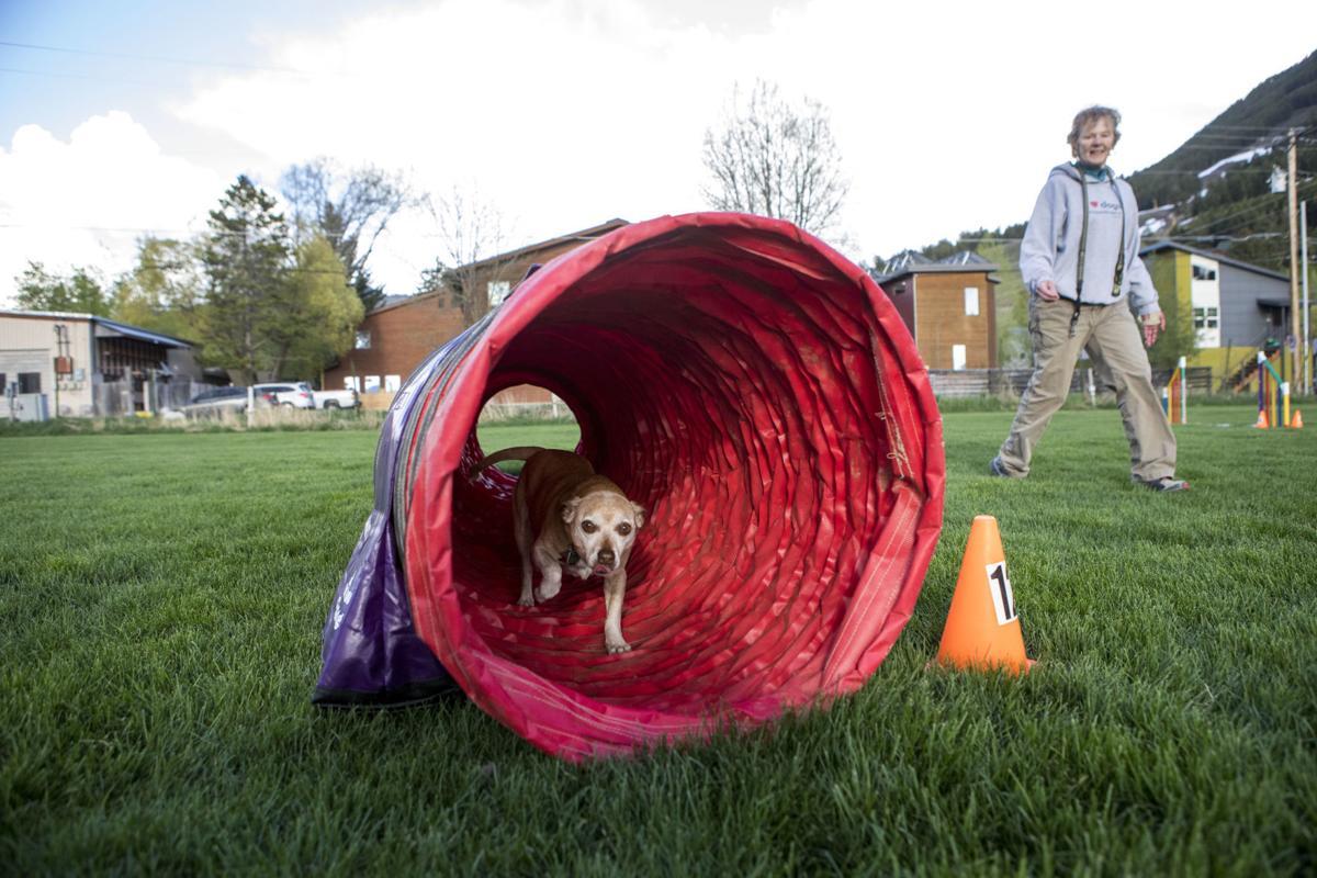 Peak pets agility