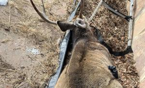 CWD spreads slow in parts of Wyoming, fast in others