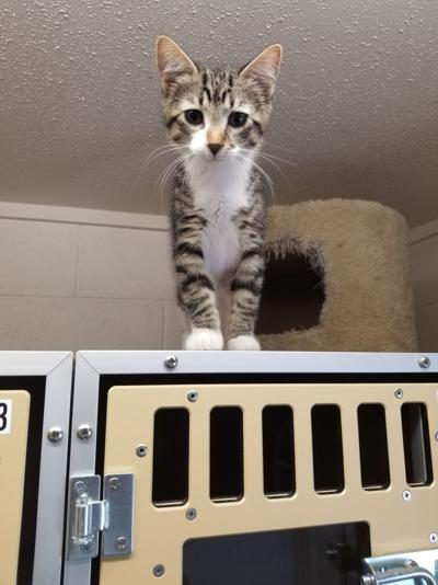 Pet of the Week - Tiny Tim