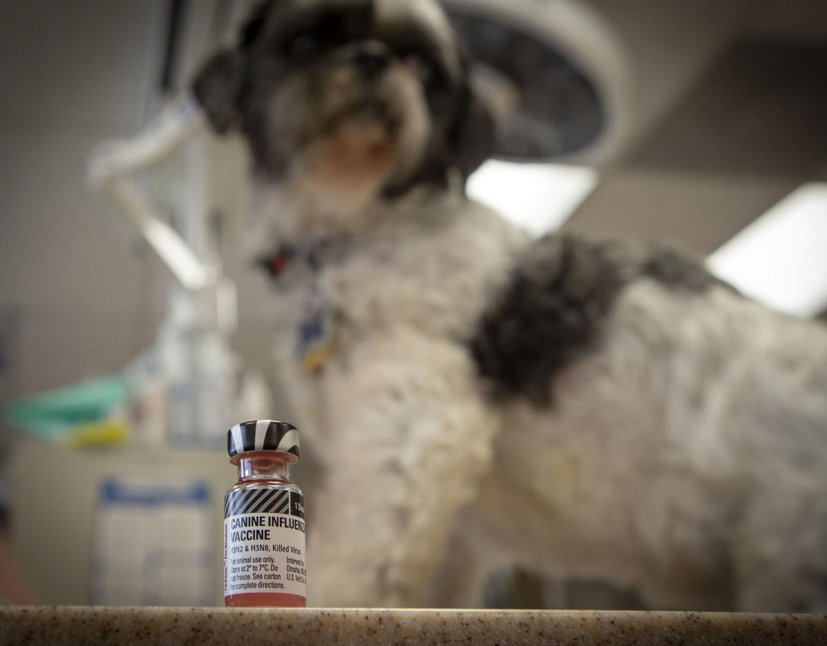 Canine flu vaccine
