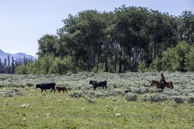 Upper Green River grazing allotment