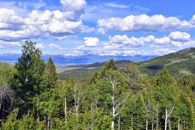 Maytag-Teton Timbers