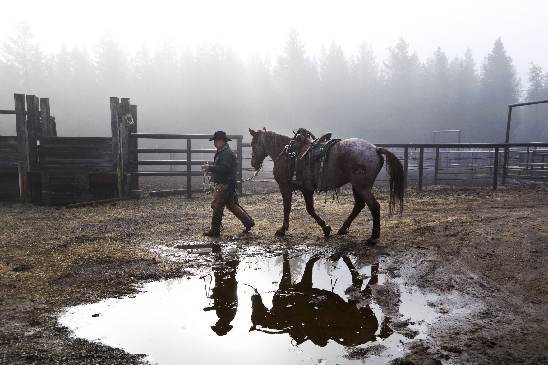 Us Area Code Range%0A The U S  Forest Service taps Bureau of Land Management mustangs for  backcountry management