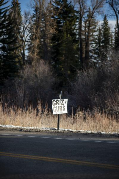 Grizzly bear crossing sign on Highway 390