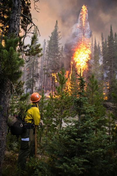 Forest Restoration Court Battle