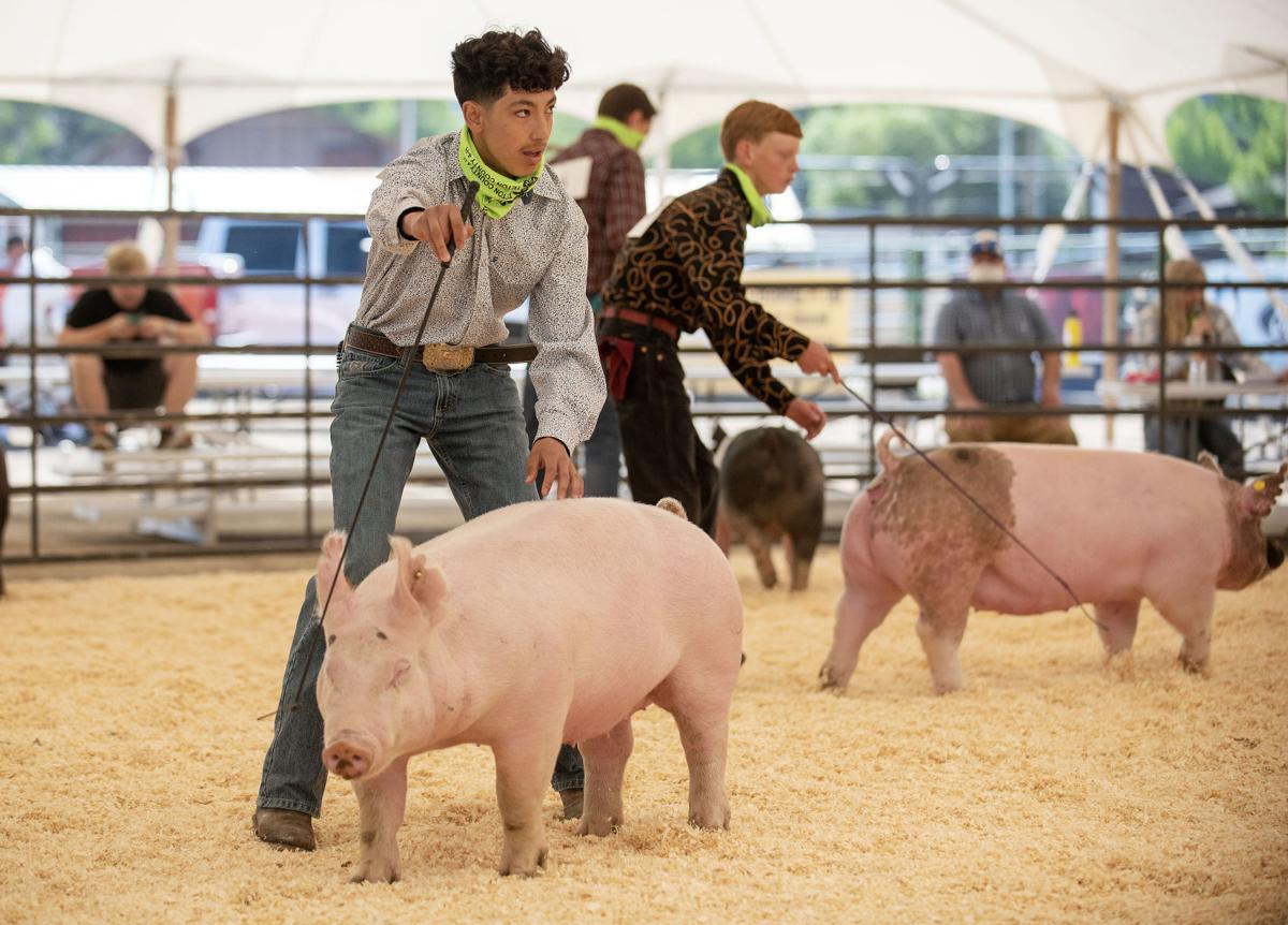 Teton County Fair 4-H swine showmanship
