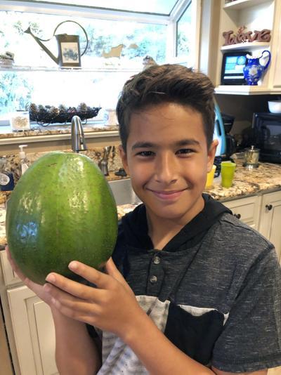 Avocado Record