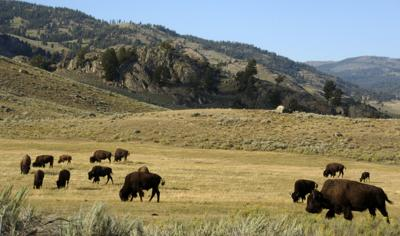 Endangered Species Act is a win-win for national parks and