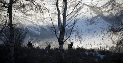 No clear answer for elk problem