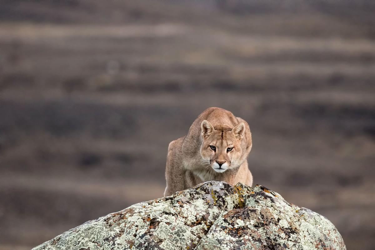 Night of the Wild Cat