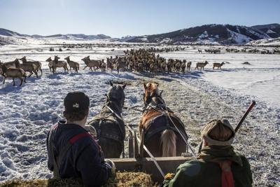 Elk Feedgrounds