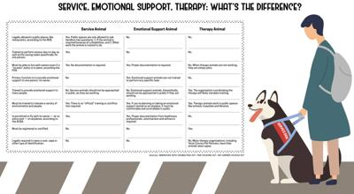 Service, emotional support, therapy: what's the difference?