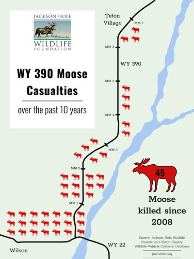 Moose carcasses pile up at Jackson Hole intersection | This Just In
