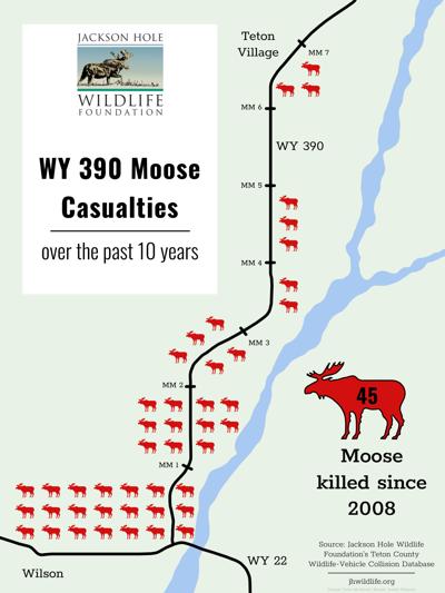Highway 22/390 moose collisions