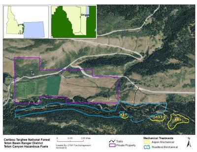 Teton Canyon fuels reduction