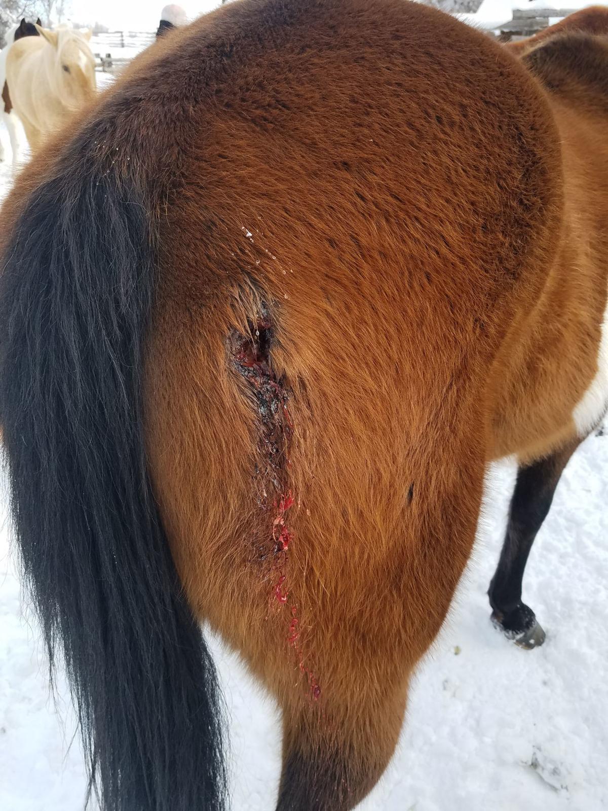 Moose Head Ranch horse