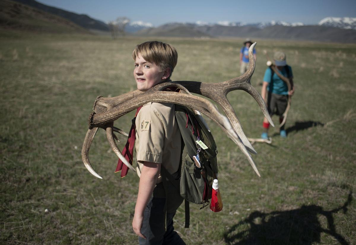 Boy Scouts antler collection