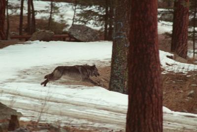Wildlife Killing Lawsuit